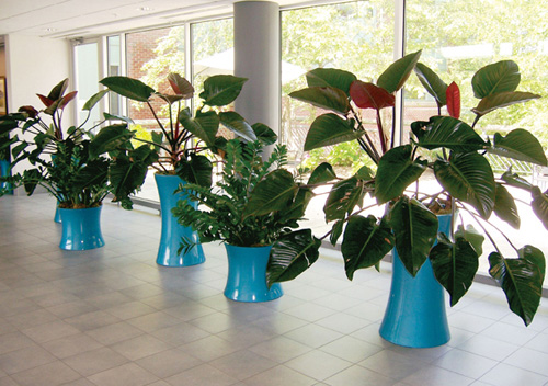 Professional Indoor Plant Care Service | Stevens And Associates