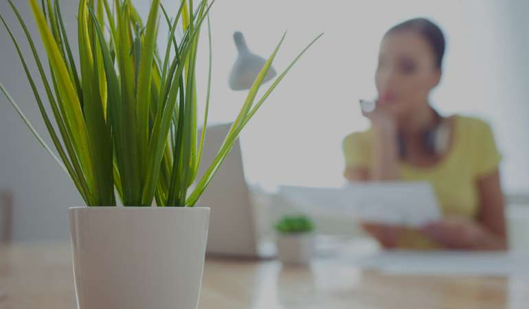 House Plants Naturally Purify Indoor Air