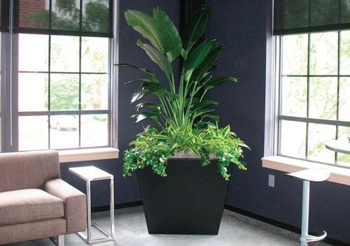 Superieur Interior Plant Design And Maintenance Irvine