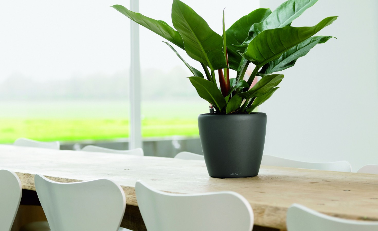 How To Choose The Best Indoor Plant Service For Your Office Plants